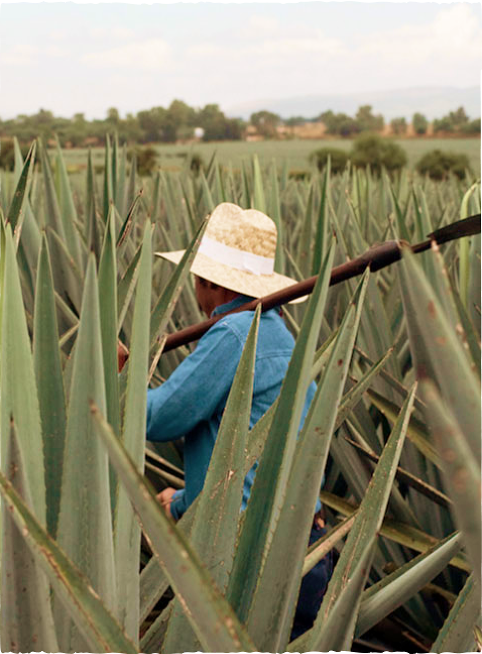 Don Julio Tequila Agave Farm