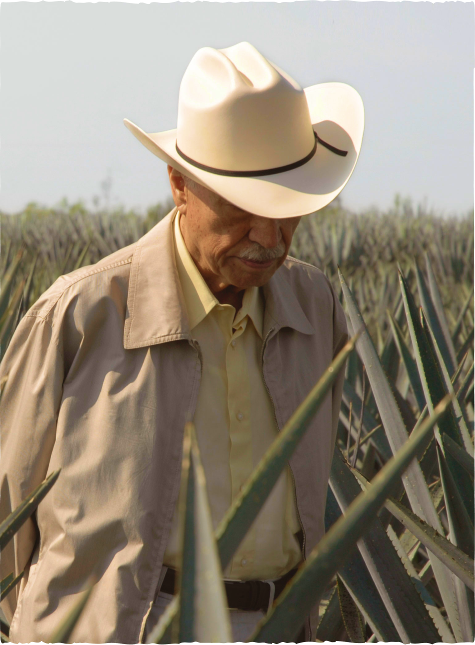 Don Julio González at a Tequila Agave Farm